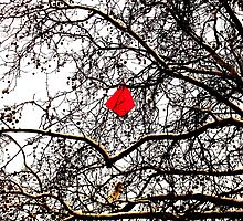 Deflated Red Balloon in a Tree by Vincent J Newman