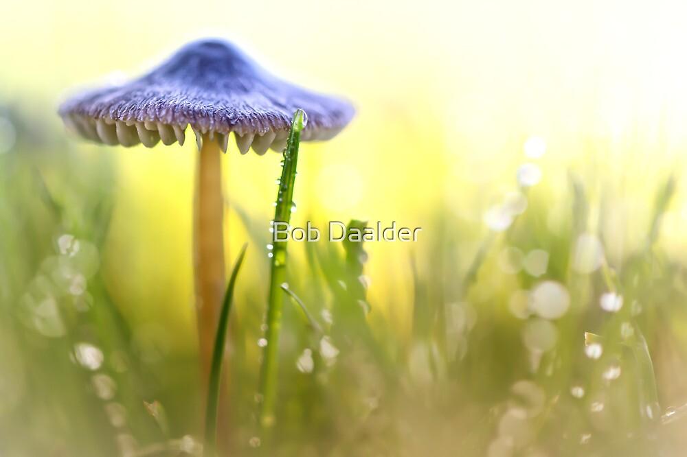 Magic Mushroom... by Bob Daalder