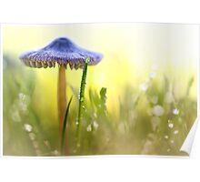Magic Mushroom... Poster