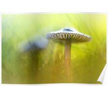 Mighty Marvelous Mushroom.... Poster