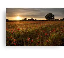 Evening poppies Canvas Print