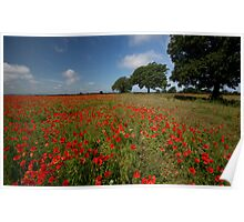 Poppy field, Send Poster