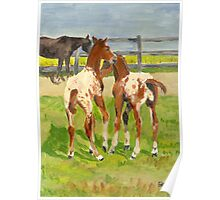 Playtime Appaloosa Foals Poster