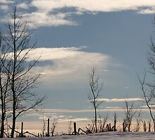 Ragged Fence by Kathi Arnell
