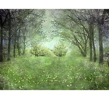 He's In The Orchard Photographic Print