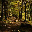 Padley Gorge Trail by John Dunbar