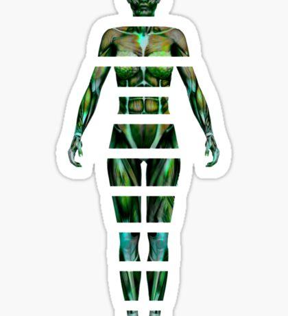 Sliced Anatomy Female Sticker