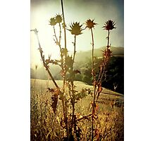 Each new day is a gift Photographic Print
