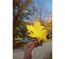Autumn's Favorite Color: Yellow Photographic Print