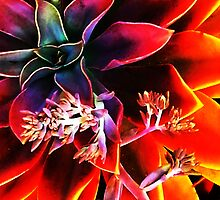 Nature as Artist 164 by JEANNE KIELY