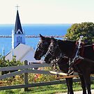 Horse Carriage With a View by Jeri Garner