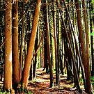 Tall Trees by Jeri Garner