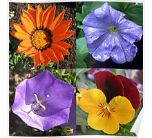 Quartet of Summer Flowers Collage Poster