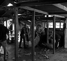 The Shearing Shed by Noel Elliot