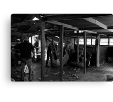 The Shearing Shed Canvas Print