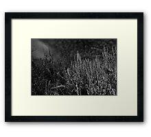 B&W Field Brush Against Sky Framed Print
