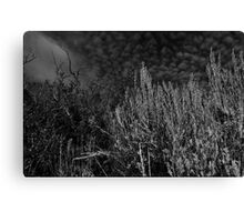 B&W Field Brush Against Sky Canvas Print