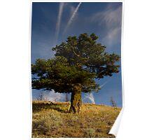 Zen Bonsai Tree from Below Poster