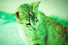 Lomo Kitty by tropicalsamuelv