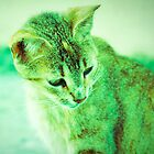 Lomo Kitty by tropicalsamuelv