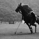 Polo - The Catch by Mark Bolton