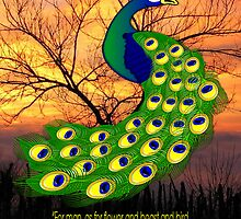 The Peacock and Quote by Dennis Melling