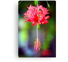 The Christmas Flower Canvas Print