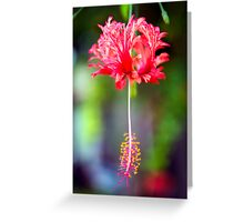 The Christmas Flower Greeting Card