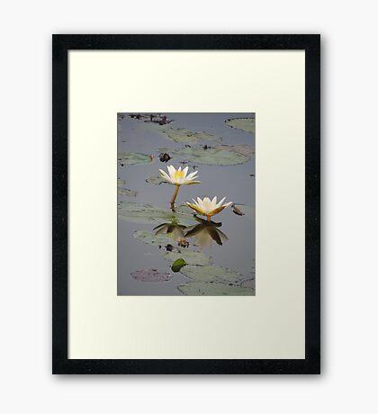 Lily White Reflection Framed Print
