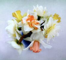 Spring Daffodil Bouquet by LouiseK