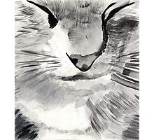 Cat Face Photographic Print