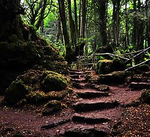 Puzzlewood by PhilJohnPhoto