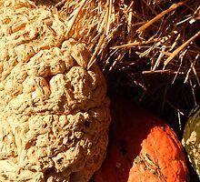 Pumpkins & Gourds by LManfredi