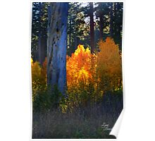 """Glowing Aspens"" Poster"