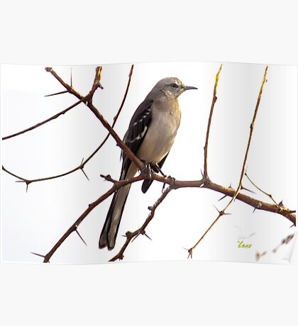 Sitting on a Branch Poster