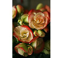 Begonias On Fire Photographic Print