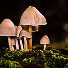 Toadstools by JEZ22