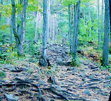 Rocky Forest Adventure by Phil Perkins