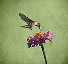 Hummingbird and Zinnia by Sandy Keeton