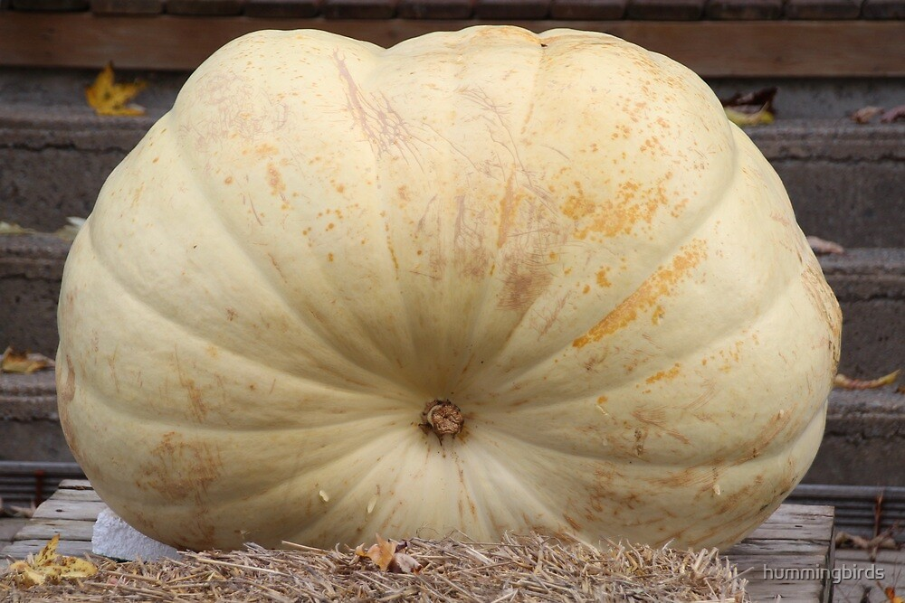 Big Daddy Pumpkin by hummingbirds
