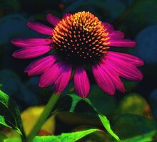 Hot Pink Coneflower by Sharon Woerner