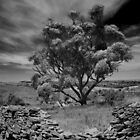 Hampton Tree by kurrawinya