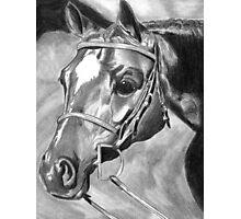 Quarter Horse Hunter Photographic Print