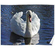 Misunderstood Swan Poster