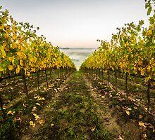 Autumn Vineyard by Raffaello Terreni