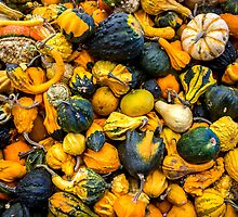 Gourds Galore by Mikell Herrick