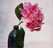 hydranghea by lucyliu