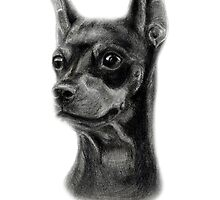 Miniature Pinscher by Danguole Serstinskaja