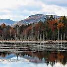Remote Pond - Beaver Lodge by T.J. Martin