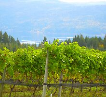 Grape Vines of Celista by HomeTimeArt